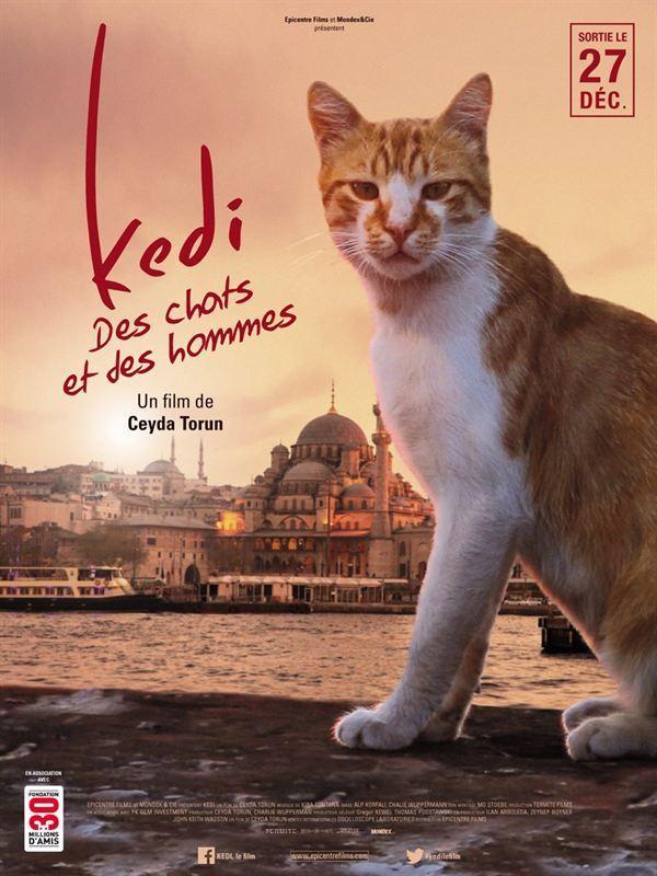 Affiche de Kedi - Des chats et des hommes